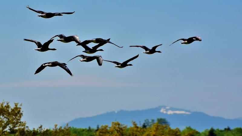 World Migratory Bird Day 2020: Know Date, Theme and Significance of The Day Dedicated to Migratory Birds