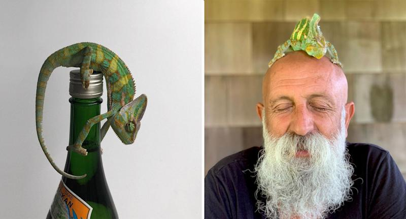 Winston the chameleon on top of a bottle (left). And sitting on top of an old bald man's head (right).
