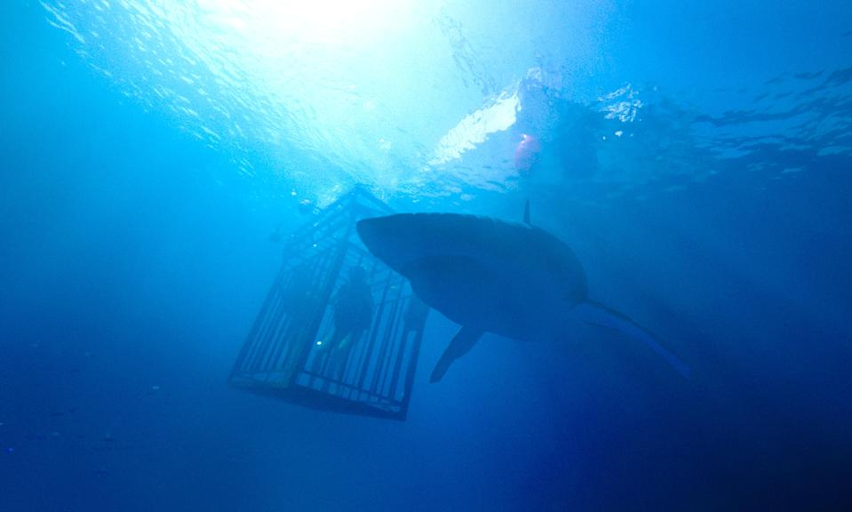 47 Meters Down, starring Mandy Moore and Claire Holt, earned a tidy little box office number