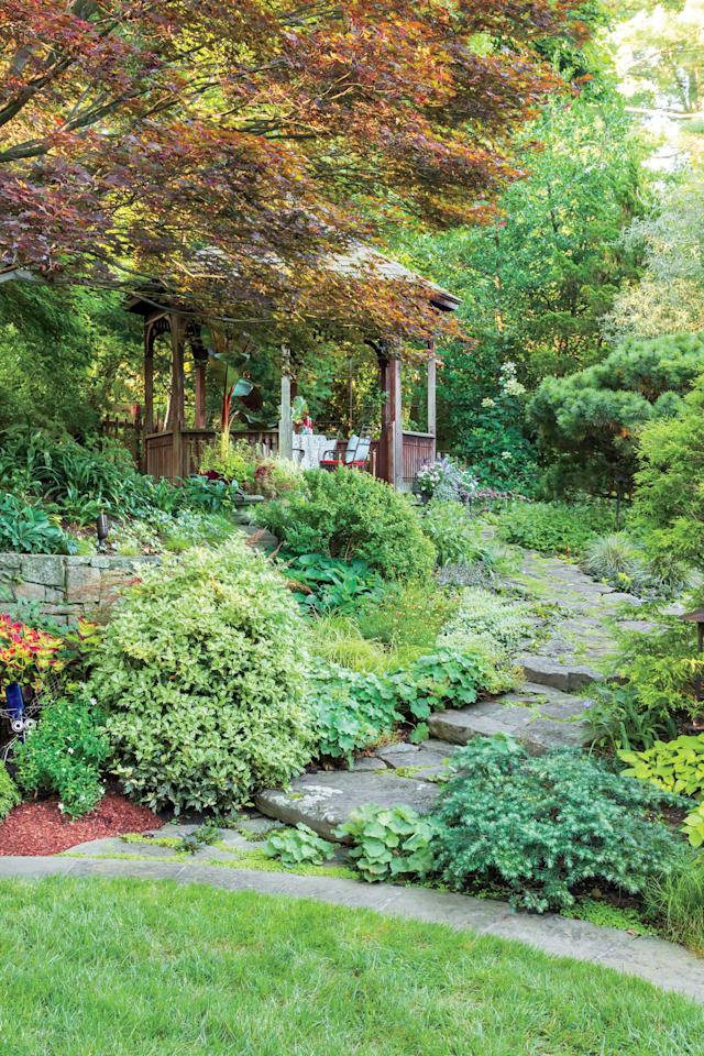 """<p>Back when Katz began designing the garden, the most pressing issue was runoff. The backyard slopes steeply toward the house, and water went with it. So she stairstepped the hill into several levels and used stones to guide the runoff. French drains at the base of each level carry the water around the house and to the front. Plantings and a compact lawn slow the water too. A recirculating waterfall plunging down the slope ties together a gazebo at the top with a stone terrace next to the house.</p> <p> A marbled """"Goshiki"""" holly osmanthus and """"Feelin"""" Blue' dwarf deodar cedar greet you at the foot of a stone path that leads to a gazebo shaded by a stunning """"Bloodgood"""" Japanese maple.</p>"""