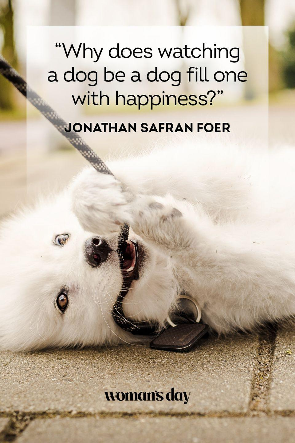 """<p>""""Why does watching a dog be a dog fill one with happiness?""""</p>"""