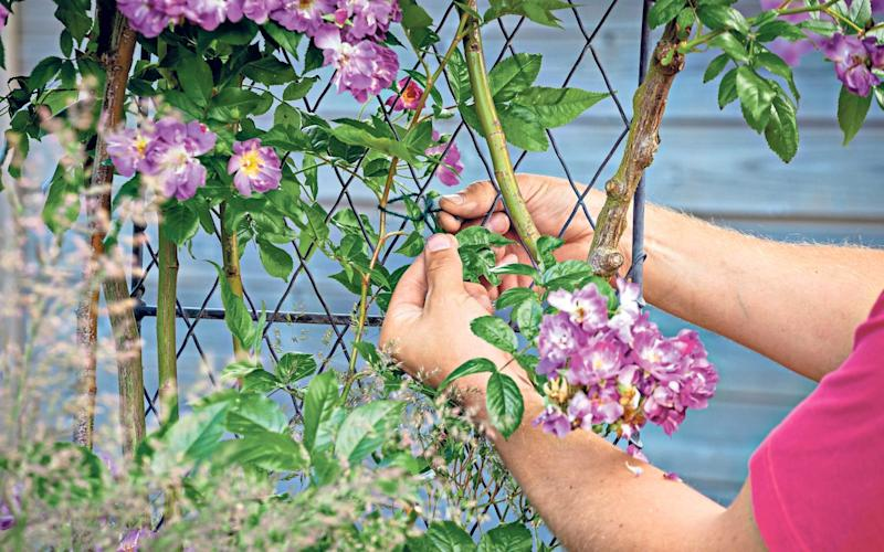 Be prepared: check that trellises are firmly anchored and that the plants they support are well tied in - Alamy
