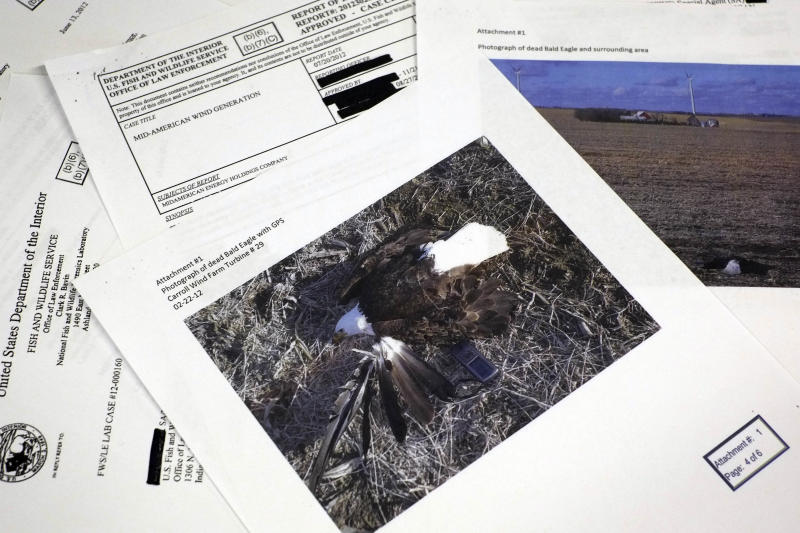 This photograph made in Washington, Wednesday, Sept. 11, 2013, shows pages from a U.S. Fish and Wildlife Office of Law Enforcement document obtained with a Freedom of Information Act, (FOIA) request by the Associated Press in the investigation of a dead bald eagle the reports says was found at the Carroll Wind Farm in Carroll, Ia. (AP Photo/J. David Ake)