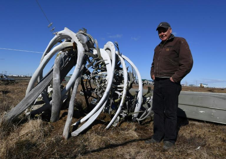Willard Church Jr., a member of the Yupik Eskimo community, stands next to old whale bones outside his house in the town of Quinhagak in Alaska