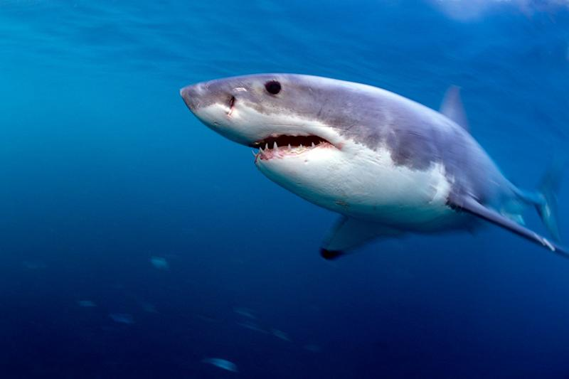 The Simple Way You Can Help Protect Sharks from Inhumane Deaths This Shark Week