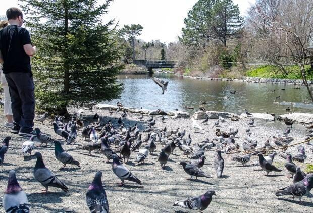 The pigeons and ducks of Bowring Park enjoyed the increased foot traffic and handfuls of food.