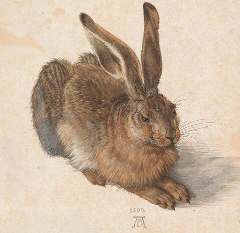 The Hare: Albrecht Durer's works are rarely displayed because they are so fragile - Credit: getty