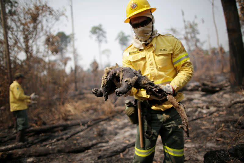 A Brazilian Institute for the Environment and Renewable Natural Resources (IBAMA) fire brigade member holds a dead anteater while attempting to control hot points in a tract of the Amazon jungle near Apui