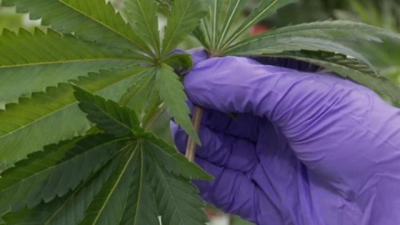Medicinal and recreational cannabis should be separate, say researchers
