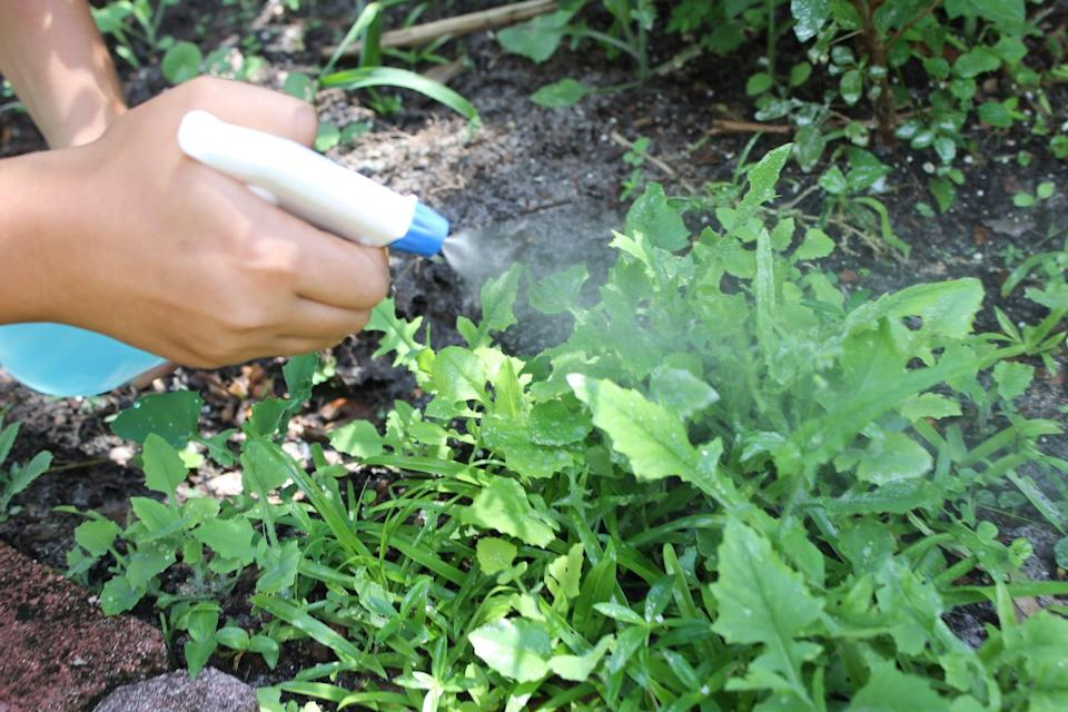 <p>Go outside and spray the mixture onto the weeds. Coat all surfaces of the weed with the spray.</p>