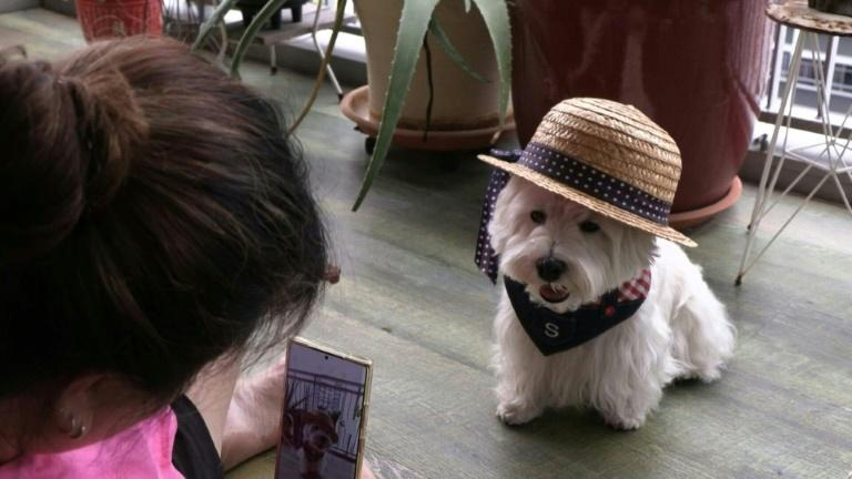 Digital dogs: pet influencers on the rise in Singapore (AFP/Catherine LAI)