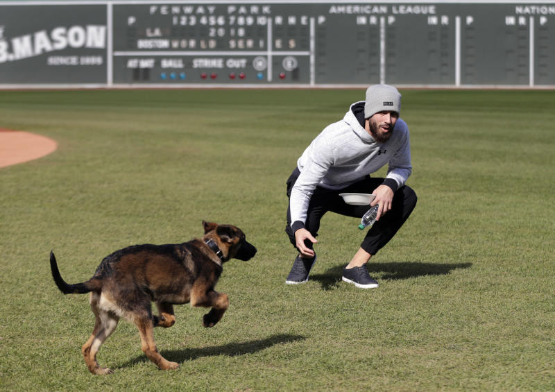 World Series Bark Park: Porcello's pup romps around Fenway