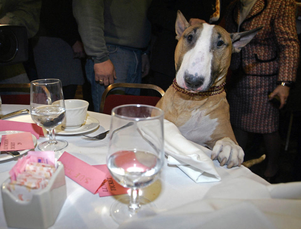 FILE - Unlikely top dog Rufus, a tan-and-white bull terrier and America's top dog after winning Best in Show in the Westminster Kennel Club show, stands over a table at Sardi's restaurant in New York, in this Wednesday, Feb. 15, 2006. (AP Photo/Shiho Fukada, File)