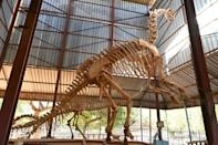 Dino delight: Niger's national museum specialises in palaeontology, history and art -- and also boasts a zoo