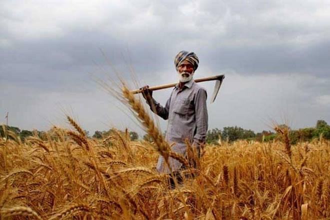 Agriculture, india, indian agricultural, agricultural changes in india, opinion, financial expressA