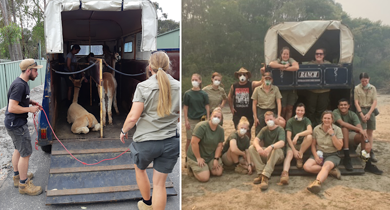 Left are a man and a woman standing a horse float with llamas in it. On the right is a photo of 13 people behind a horse float. They are all wearing masks and there is smoke in the air.