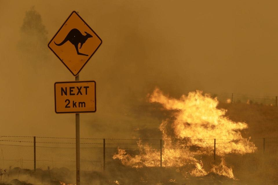 Fire burning near a road sign warning of kangaroos.