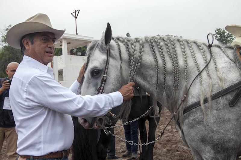 A tough-talking former rancher who doesn't shy away from controversy or cussing, Jaime Rodriguez Calderon already made history by becoming the first independent candidate to be elected governor, in 2015 (AFP Photo/Julio Cesar Aguilar)