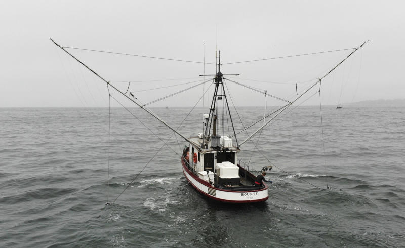 In this photo taken July 17, 2019, Sarah Bates fishes for chinook salmon on her boat Bounty off the coast of Bolinas, Calif. California fishermen are reporting one of the best salmon fishing seasons in more than a decade, thanks to heavy rain and snow that ended the state's historic drought. It's a sharp reversal for chinook salmon, also known as king salmon, an iconic fish that helps sustain many Pacific Coast fishing communities. (AP Photo/Terry Chea)