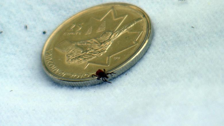 Canadian scientists track Lyme disease threat