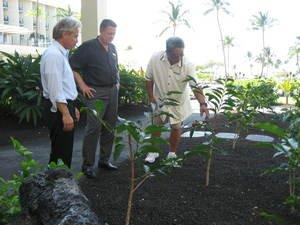 Waikoloa Beach Marriott Resort & Spa Plants Kona Coffee Trees at the Hawaii Big Island Hotel