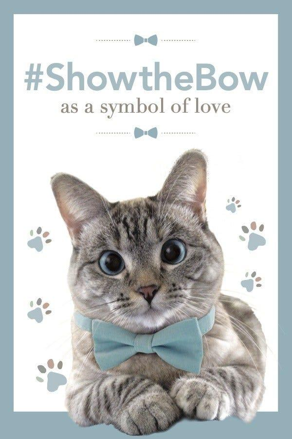 Make Your Cat an Instagram Star