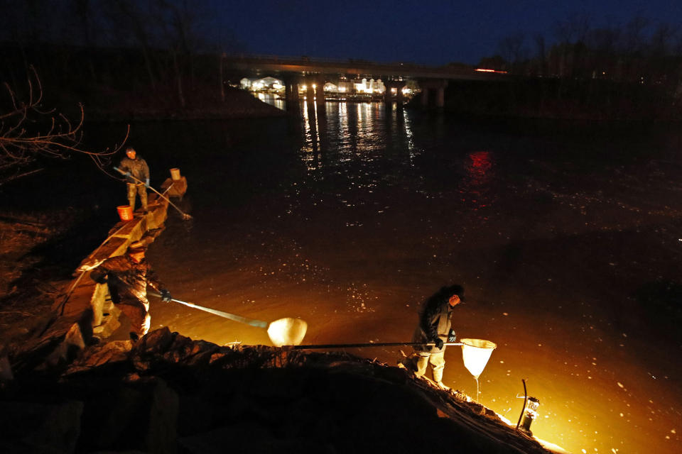 FILE-In this Thursday, April 16, 2020 file photo, eel fishermen use dip nets while fishing by lantern light in Yarmouth, Maine. The state's baby eel fishermen are hopeful for a more stable year in 2021 after the pandemic disrupted the worldwide economy last year. (AP Photo/Robert F. Bukaty, File)