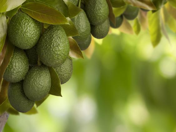 The Mexican avocado trade is linked to deforestation (iStock)