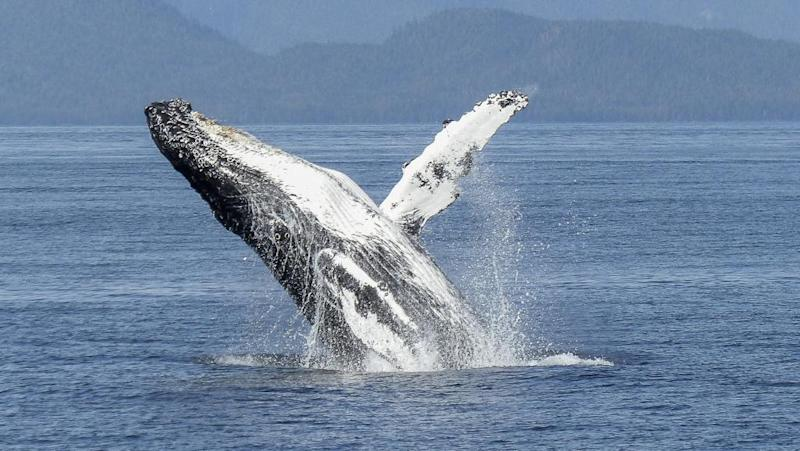 Mozambique tour operators warn against over-loving whales