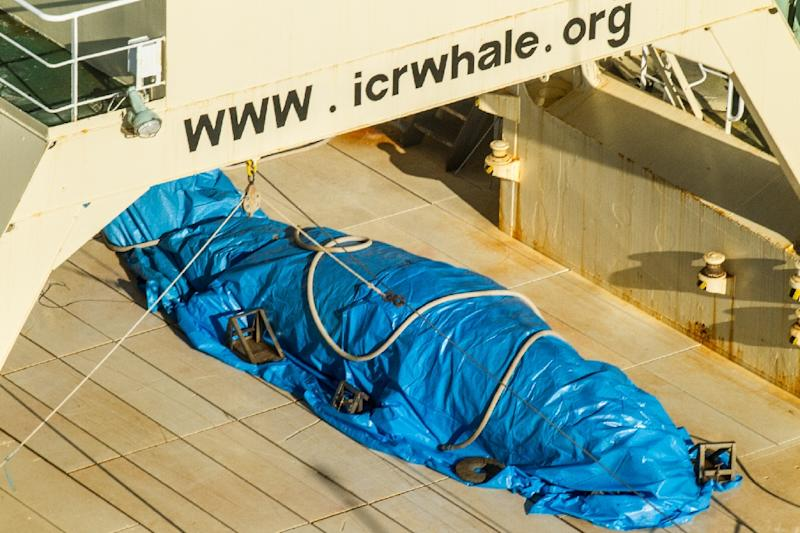 A photo released by activist group Sea Shepherd on January 15, 2017 purportedly shows a covered dead minke whale onboard Japanese ship the Nisshin Maru in Antarctic waters (AFP Photo/Glenn LOCKITCH, Glenn LOCKITCH)