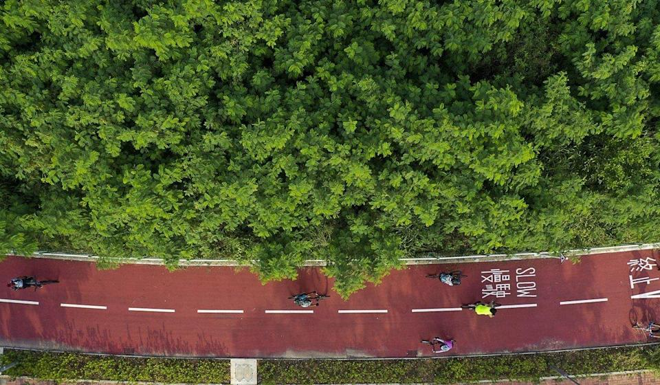 Hong Kong can do more in the right direction, such as encouraging the use of bicycles and planting more trees, green groups say. Photo: May Tse