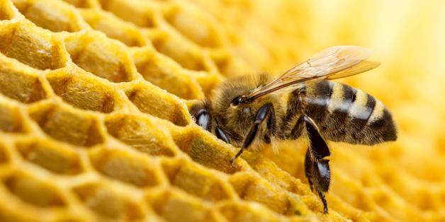 The Prospect Of A World Without Bees Is Not A Niche Concern
