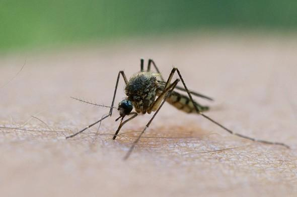 Dengue fever outbreak in holiday island Madeira