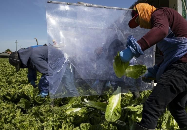 Canada has effectively banned the import of romaine lettuce from parts of Since 2016, romaine lettuce from California has been linked to outbreaks of E. coli illnesses in the US and its northern neighbor