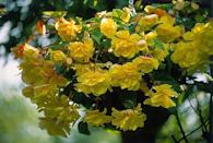 """<p>Begonias come in many different colors ranging from hot pink to deep red to bright orange. Some are grown strictly for their striking foliage. They're a reliable performer and will bloom all season long without deadheading. Needs mostly shade.</p><p>Varieties to try: Funky Pink, Dragon Wing Red</p><p><a class=""""link rapid-noclick-resp"""" href=""""https://www.provenwinners.com/plants/begonia/funky-pink-begonia-x-hybrida"""" rel=""""nofollow noopener"""" target=""""_blank"""" data-ylk=""""slk:SHOP NOW"""">SHOP NOW</a></p>"""