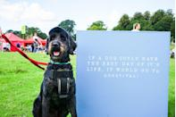"""<p>Treat yourself and your pup to a celebratory weekend at Burley Park's Dogstival, in the beautifully bucolic New Forest. Take part in the 'Barkour' adventure course, taste some freshly baked dog treats whipped up during a live culinary display, visit the pop-up vet and physiology to make sure your pooch is putting their best paw forwards. BT</p><p><a href=""""https://dogstival.co.uk/"""" rel=""""nofollow noopener"""" target=""""_blank"""" data-ylk=""""slk:Dogstival"""" class=""""link rapid-noclick-resp"""">Dogstival</a> at Burghley Park, New Forest, is on 5 and 6 June.</p>"""