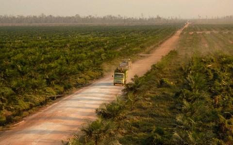 A truck transports palm oil seedlings through a palm oil plantation at Kota Waringin Timur regency in Indonesia's Central Kalimantan province...A truck transports palm oil seedlings through a palm oil plantation at Kota Waringin Timur regency in Indonesia's Central Kalimantan province October 2, 2007. Booming world demand for palm oil from Indonesia for food and biofuels is posing multiple threats to the environment as forests are being cleared, peat wetland exposed and carbon released, a report said on Thursday. Picture taken October 2, 2007. REUTERS/Hardi Baktiantoro (INDONESIA) - Credit: Reuters/STRINGER/INDONESIA