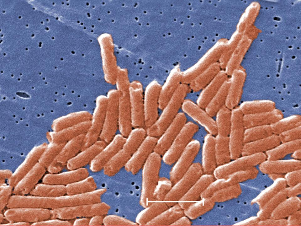 CDC have reported two outbreaks of salmonella   (PA)