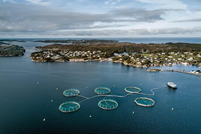 A fish farm off the village of Rong, Norway, on Sept. 17, 2017. (Sergey Ponomarev/The New York Times)