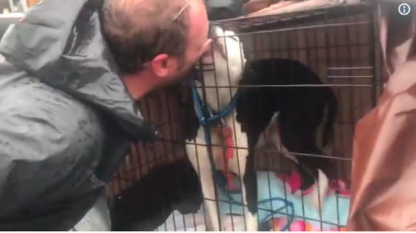 Thanks to a couple of brave animal lovers, one lucky North Carolina dog was