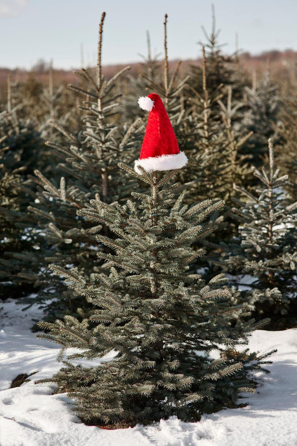"""<p><strong>Oregon, Wisconsin</strong> (November 1-December 24)</p><p>As much fun as choosing a tree sounds, we're most excited about all of the offerings in <strong><a href=""""http://www.hannschristmasfarm.com/weekend-events/"""" rel=""""nofollow noopener"""" target=""""_blank"""" data-ylk=""""slk:Hann's Christmas Tree Farm"""" class=""""link rapid-noclick-resp"""">Hann's Christmas Tree Farm</a></strong>'s Christmas store. There are countless items to decorate your home, and you can fill your belly with fresh popcorn and a cup of complimentary hot cider. Santa and Mrs. Claus will also be there to say hi to your kids on the three weekends after Thanksgiving. <br></p>"""