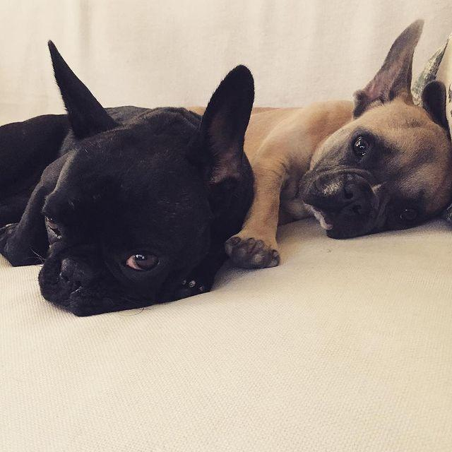 """<p>Gaga called Koji and Asia """"my loves"""" in a 2015 picture.</p>"""