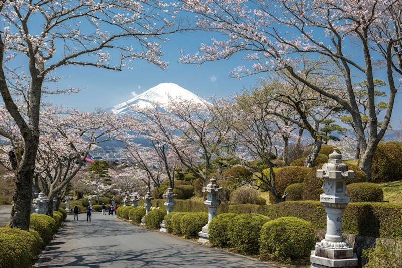 Cherry Blossoms at buddhist temple in Gotemba City, Japan.