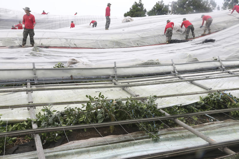 South Korean marine soldiers work to recover farming greenhouses after Typhoon Lingling struck Jeju Island, South Korea, Sunday, Sept. 8, 2019. South Korea on Sunday was surveying the impact of one of the most powerful typhoons to ever hit the Korean Peninsula, but the country appears to have escaped widespread damage. (Go Sung-shick/Yonhap via AP)