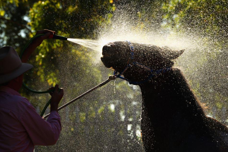 A horse is washed down with a hose during preparations for 2012 Sydney Royal Easter Show at the Sydney Showground on April 4, 2012 in Sydney, Australia. The annual event is Australia's largest, attracting around 900,000 visitors over the duration of the two-week agricultural show.