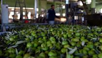 Bosnia has developed an olive oil industry