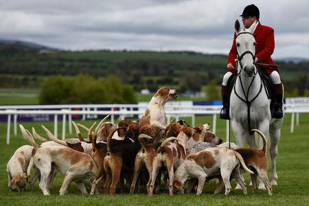 The hunt master and dogs walk the track before racing begins at Punchestown Racecourse in Naas, Ireland, April 27, 2017. REUTERS/Clodagh Kilcoyne