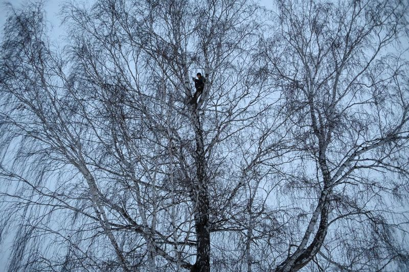 Russian student and blogger climbs a tree for better celular internet connection his remote Siberian village of Stankevichi