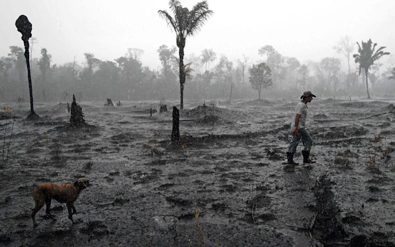 (FILES) In this file photo taken on August 26, 2019 Brazilian farmer Helio Lombardo Do Santos and a dog walk through a burnt area of the Amazon rainforest, near Porto Velho, Rondonia state, Brazil. - Deforestation in the Brazilian Amazon registered a semi-annual record of 3,070 km2 between January and June, 2020, according to official data that increases pressure on Brazilian President Jair Bolsonaro to abandon his projects of economic opening of the largest rainforest in the planet. (Photo by CARL DE SOUZA / AFP) (Photo by CARL DE SOUZA/AFP via Getty Images) - Carl De Souza/AFP via Getty Images