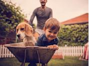<h2>Beagle</h2> <p>If your brood is especially active, consider these friendly, diminutive pooches with an insatiable appetite for playtime. (But they can be easygoing when they need to be.)</p>